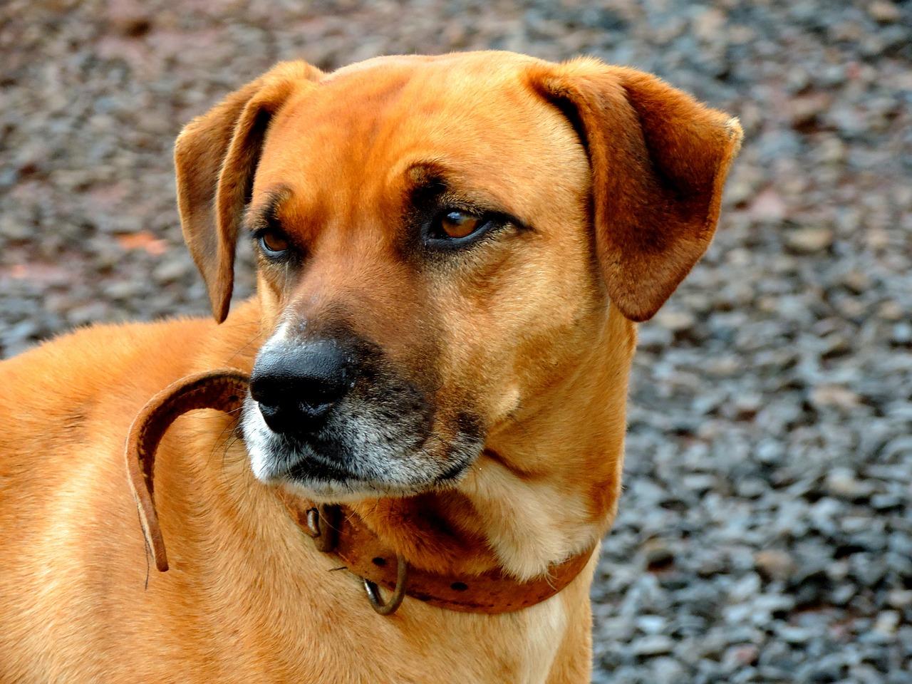 dog-463273_1280
