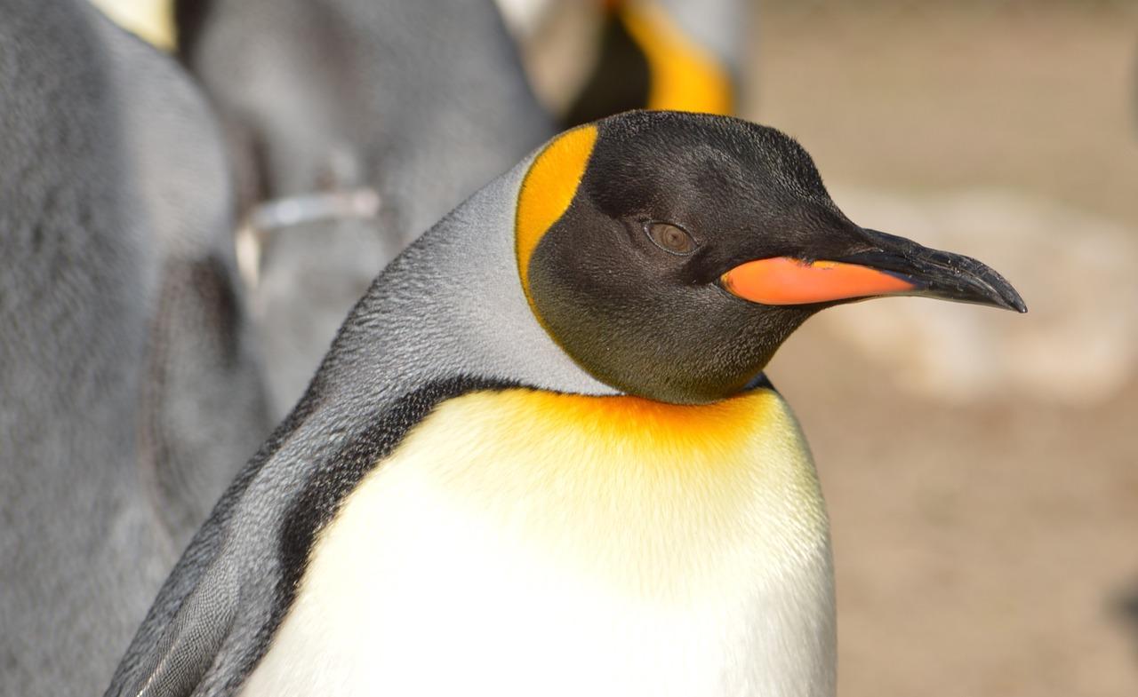 penguin-726196_1280